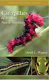Caterpillars of Eastern North America : A Guide to Identification and Natural History (Princeton Field Guides)