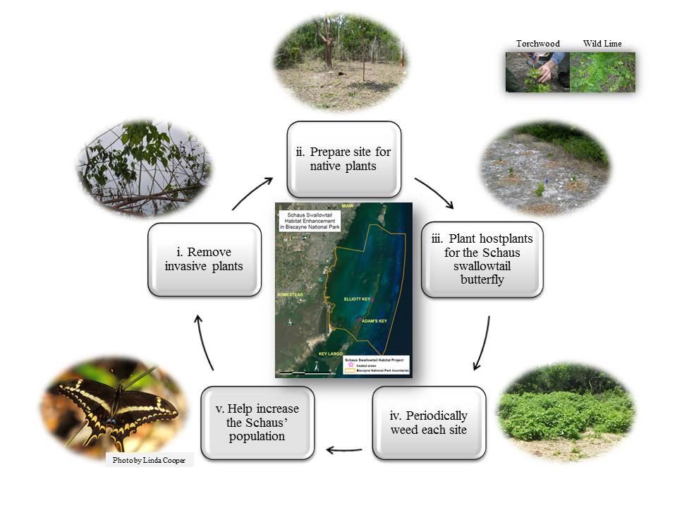 On Behalf Of The Schausu0027 Swallowtail: Habitat Enhancement At Biscayne  National Park
